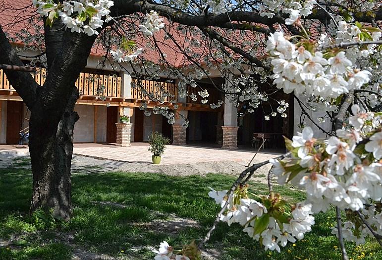 Villa Filia - Ve�k� Mader-Oko�